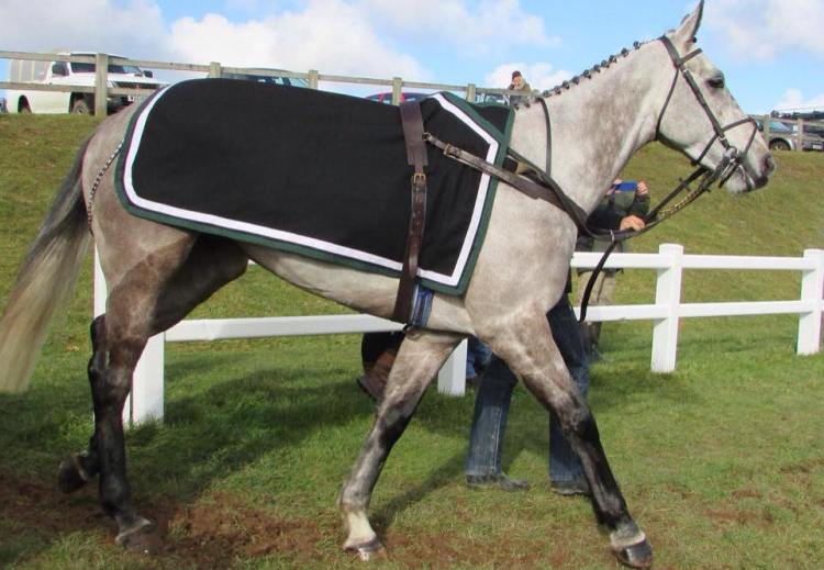 DCCOVI – 7yo grey gelding by Clodovil.